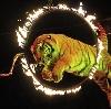 Цирки в Коркино